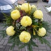 Kompozycja sezonowa z kwiatów żywych na gąbce florystycznej; wielkość: duża; 12 cytrynowych chryzantem, podkład jodłowy, zieleń dekoracyjna.