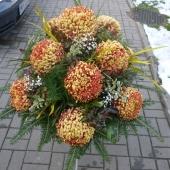 Kompozycja sezonowa z kwiatów żywych na gąbce florystycznej; wielkość: duża; 12 złocistych chryzantem, podkład jodłowy, zieleń dekoracyjna.